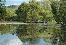 Billabong Sanctuary & Bungalow Bay Koala Village / Address:  Bruce Highway, Townsville QLD 4816 Phone:  +61 7 4778 8344 Email:  rangers@billabongsanctuary.com.au Web:  www.billabongsanctuary.com.au / by Queensland Ecotourism Directory