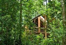 Canopy Rainforest Tree Houses & Wildlife Sanctuary / Address:  247 Hogan Road, Tarzali  QLD 4885 Phone:  +61 7 4096 5364 Email:  stay@canopytreehouses.com.au Web:  www.canopytreehouses.com.au / by Queensland Ecotourism Directory