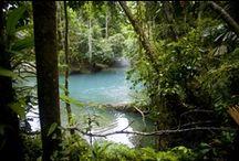 Cooper Creek Wilderness Daintree Rainforest Tours / Address:  52 CAPE TRIBULATION ROAD, Mossman  QLD 4873 Phone:  +61 7 4098 9126 Email:  walks@ccwild.com Web:  www.ccwild.com / by Queensland Ecotourism Directory
