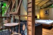 Daintree Wilderness Lodge / Address:  83 Cape Tribulation Road, Cape Tribulation  QLD 4873 Phone:  +61 7 4098 9105 Email:  leonie@beatmedical.com Web:  www.daintreewildernesslodge.com.au/ / by Queensland Ecotourism Directory