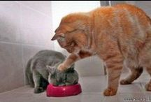 Funny Cat Lover / Cat humor, Cat funny, baby Cat. Follow me to discover amazing funny Cat pictures every day. / by Laugh Za