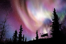 Northern Lights / by Beth Jones