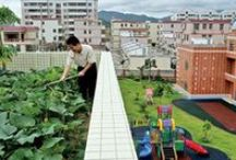 roof top gardens / by Lyons Roofing