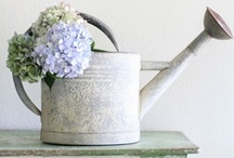 SHABBY CHIC FLORAL / by AquarianGal
