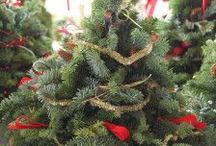 Yuletide / Yule and Christmas / by Urban Earthworm