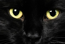 Black Cats / by Donna Bryant