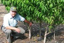 Gardening w/Fruit Trees, Orchards... / by L.r. Smith