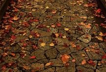 Autumn / by Judy C