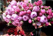 Flowers / by Aukse