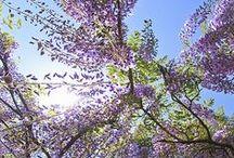 Serenità / I colori della natura tonificano l'anima, e ti fanno star bene / by Giorgio Pitzalis