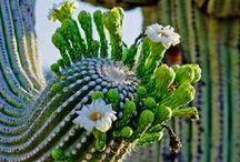 Plantes grasses, cactus .... / by Véronique Chenaut