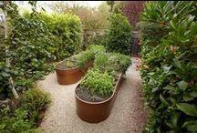 garden / by Katie Phares