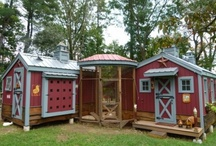 Chicken Coops / by Nicole Maloney-Funk