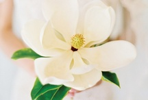A Colorless Affair: White / by Dogwood Events