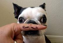 Moustache / Love Moustaches =3 / by ♥ Cachirola Rola Rola ♥