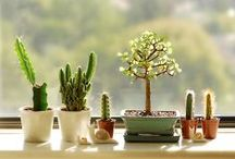 Cacti & Succulents / by Articles Team