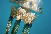 Cuties / Cute animals / by Jelly Fish