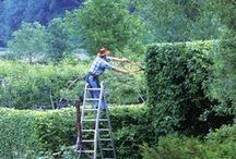Gardener_Pin yourself / Are you keen on gardening and has it become your profession ?  Make yourself known !  Join our Pinterest Board publish a photo that best represents your green soul at work. / by Blossom zine