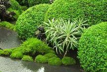 GARDEN - The Art of Landscape Gardening / by Stefan Kruse