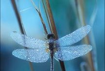 Dragonflies  / by Katie
