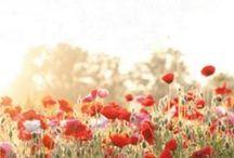 paisajes / by josefina magrane