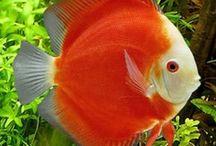 Sea my Aquarium... / by Debbie Harnden