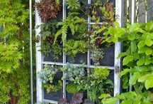 Window frame ideas / by Gail Reid