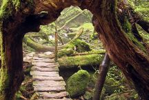 The Inspiration of Nature  / by Thala Beach Lodge Australia