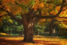 Ageless Trees / by Val