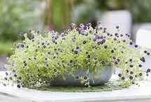 gardening in pots / by Astrid den Boer