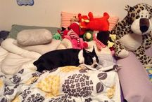 Crazy about Boston Terriers + other Doggies too! / by Christina Seiden