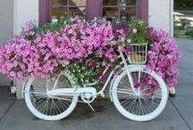 Bikes / Nothing compares to the simple pleasure of riding a bike. ~ John F. Kennedy  / by Arcadia Floral & Home Decor - Houston TX