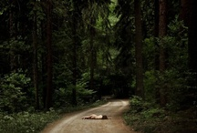 weir wood / by lorna avery