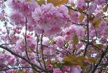 Trees  flowers and beautiful places and things / trees and flowers / by jesma archibald