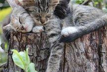kediler / by tülay akbaş