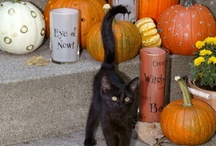 Halloween/Fall  / by Raquel Chenausky