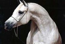 equine love / horses / by Lisa Handley