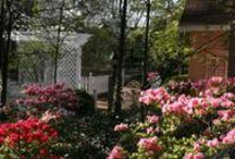 Adventures of a Master Gardener  / by Beaufort House Inn