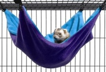 Ferret Owner's Starter Kit!  / Just some things to get your ferret started! / by Ferret.com