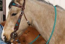Equestrian stuff / by Alexis Banda
