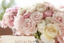 Jeannette Garden Flowers & Plants / by Jeannette Donkers-Sahuleka
