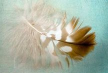 Feathers / by Cibiana Heiman