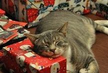 Christmas / My favorite holiday! :D <3 / by Misty the Cat