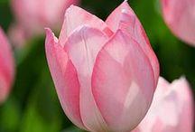 Flowers & Gardens / by Rae Weaver