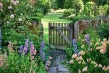 Garden / by Holly McKay