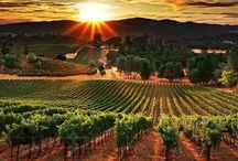 Wine / Wines I have tried and regions I would like to see / by Daniel James
