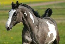 Equestrian / by Brianna Bohringer