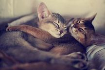 Furry friends / by Tiffany Prothero