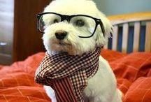 Too freakin cute!! / by Tiffany Criner