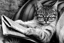 Cats / by Stefano Tessadori